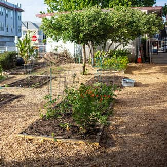 A new garden with new plants and planter boxes
